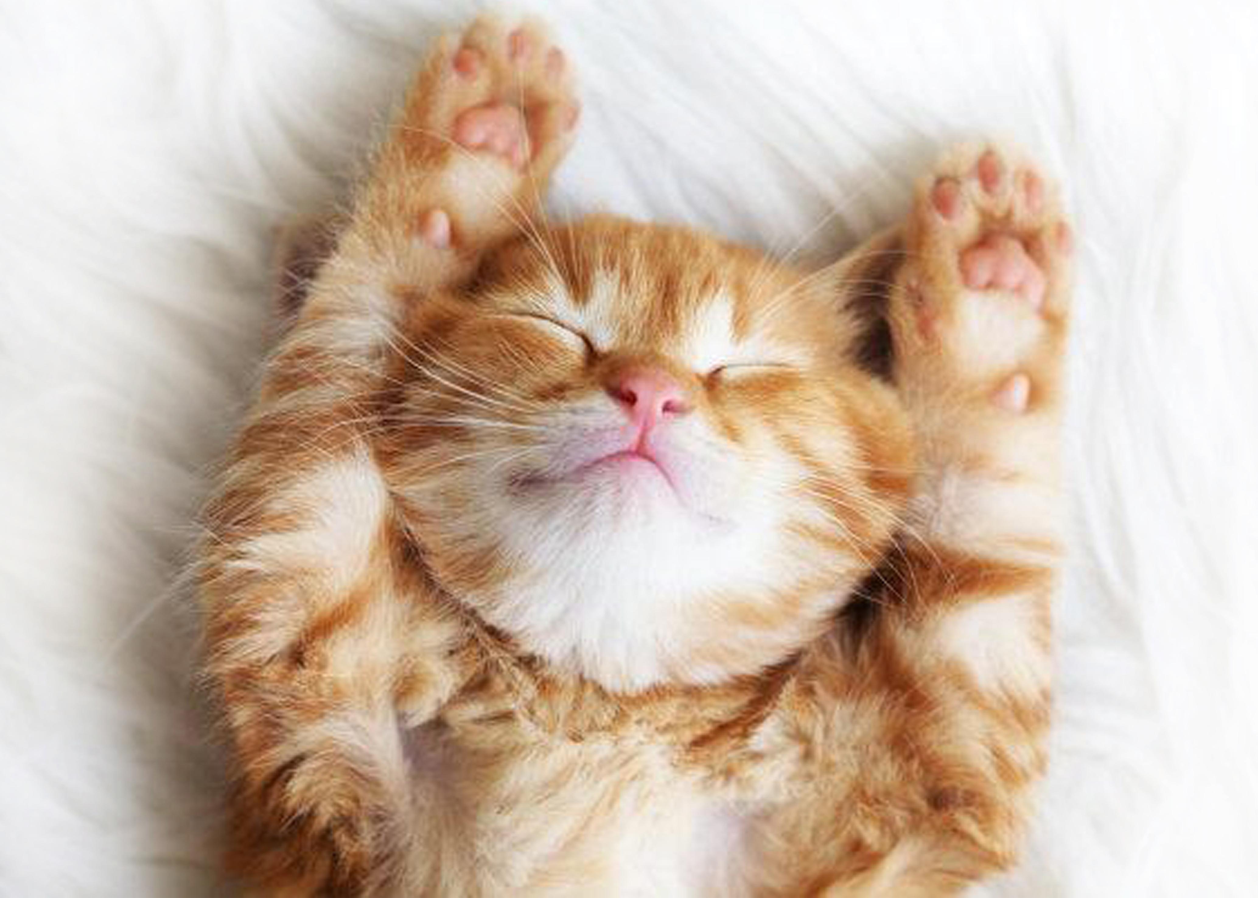 Ads  Kittens aangeboden